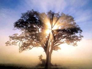 treeoflife_1_