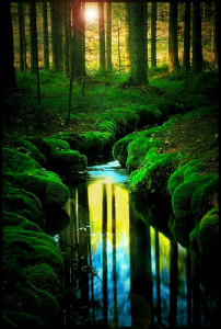 dreamworld-mature-river-forest-sunlight-favim-com-471287